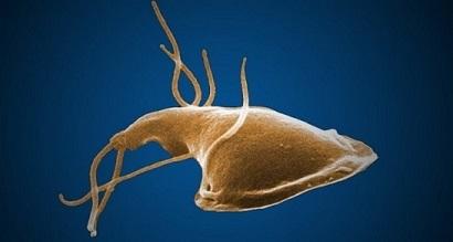 Wat doet giardia bij honden - Exophytic condyloma a méhnyak